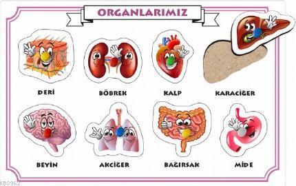 İç Organlarımız