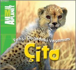 Vahşi Doğadaki Yaşamım - Çita