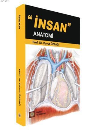 İnsan Anatomi