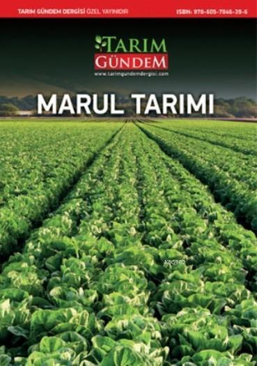 Marul Tarımı