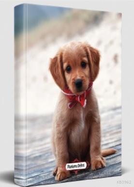 Süresiz Planlama Defteri - Masum Köpek