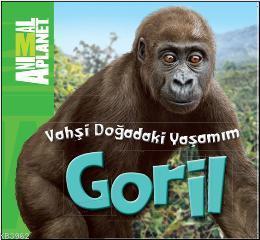 Vahşi Doğadaki Yaşamım - Goril